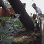 raccoon-removal-and-control