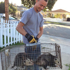 Opossum Trapping and Removal in Long Beach