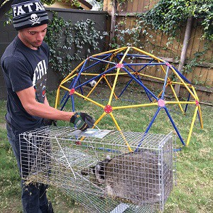 Orange County Animal Removal & Trapping Services