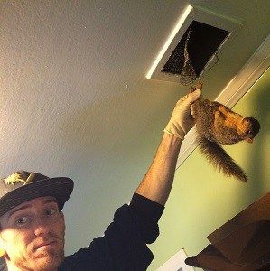 squirrel-removal-and-control